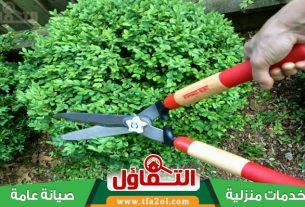 عامل قص اشجار بالدمام يتفنن في تجميل وتقليم الأشجار وتشكيلها مع زراعة الأشجار والاهتمام بها