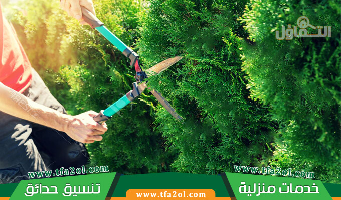 عامل قص اشجار جدة وافضل فني تقليم أشجار لدي شركة إزالة الأشجار وتهذيبها بسعر مناسب